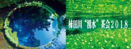 柿田川湧水茶会